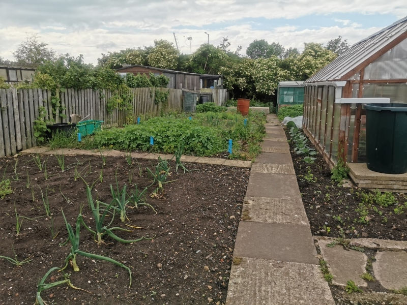Image of a garden path  on High Newport Allotments